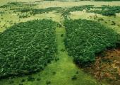Planejamento e gestão ambiental